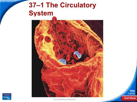 End Show Slide 1 of 51 Copyright Pearson Prentice Hall 37–1 The Circulatory System.