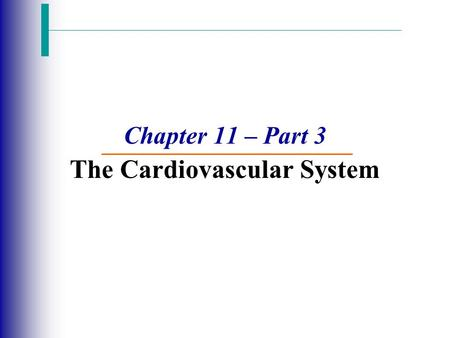Chapter 11 – Part 3 The Cardiovascular System. Blood Vessels: The Vascular System  Blood circulates inside the blood vessels, which form a closed transport.