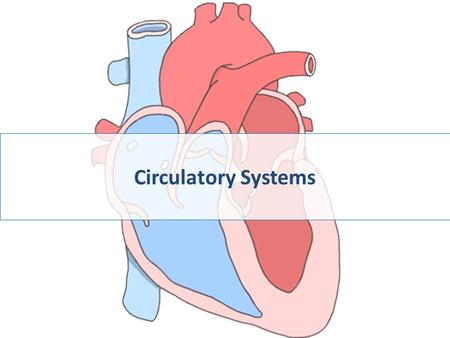 Circulatory Systems Take a look at a skeleton and see how well a heart is protected — open heart surgery takes breaking a body to get to the heart.