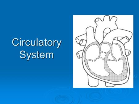 "Circulatory System. Heart Terms Myocardium – The muscle that forms the heart wall. Creates the ""beat"" of the heart. Endocardium – A tough membrane that."