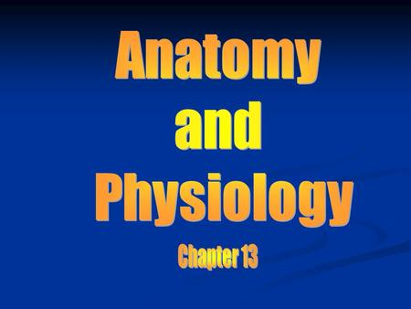 Anatomy and Physiology Chapter 13.