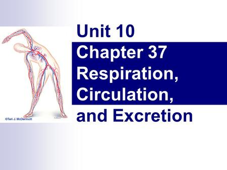 Unit 10 Chapter 37 Respiration, Circulation, and Excretion