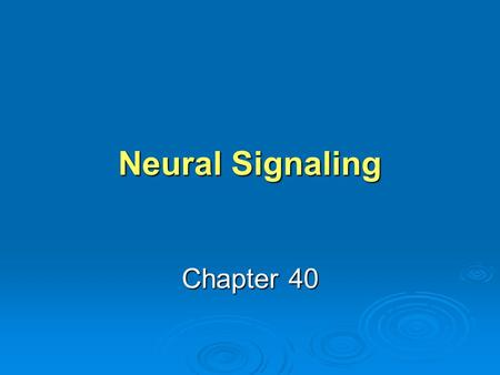 Neural Signaling Chapter 40. Learning Objective 1 Describe the processes involved in neural signaling: reception, transmission, integration, and action.