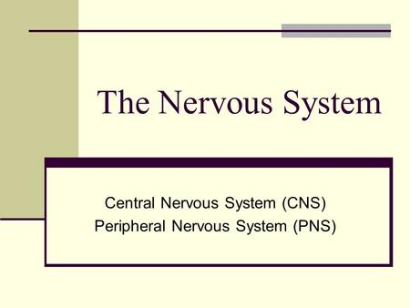 Central Nervous System (CNS) Peripheral Nervous System (PNS) - ppt ...