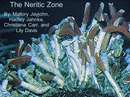 The Neritic Zone By: Mallory Jayjohn, Hadley Jahnke, Christiana Carr, and Lily Davis.