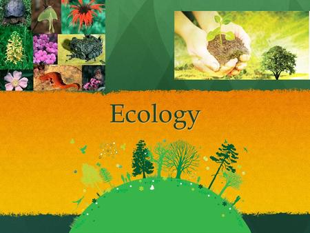 Ecology. What is ecology? Ecology is t he study of the relationships between living organisms and their environment. Ecology is t he study of the relationships.