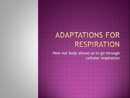 How our body allows us to go through cellular respiration.
