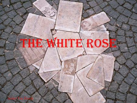 The White rose Ashley Van Elswyk. Who were they? Non-violent, resistance group during WWII Students from University of Munich June 1942-February 1943.