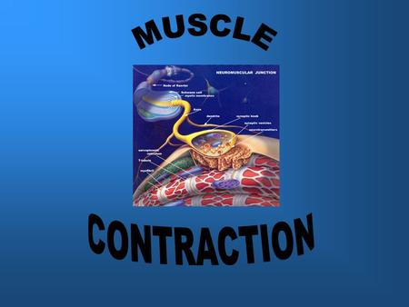 Yesterday we finished off talking about the different kinds of muscle contractions. Today we are going to look at how a muscle produces these contractions.