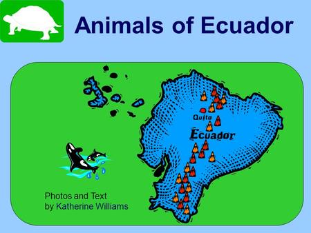 Animals of Ecuador Photos and Text by Katherine Williams.
