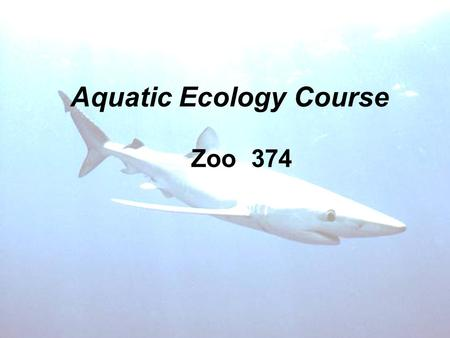 Aquatic Ecology Course Zoo 374. Prof.Dr.Hanan M Mitwally, Marine Biology B=Marine Mammals Otters Polar bear Dolphin.