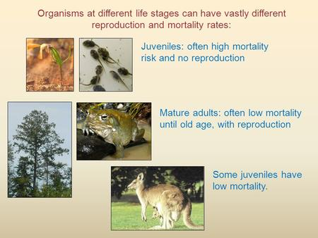 Organisms at different life stages can have vastly different reproduction and mortality rates: Juveniles: often high mortality risk and no reproduction.