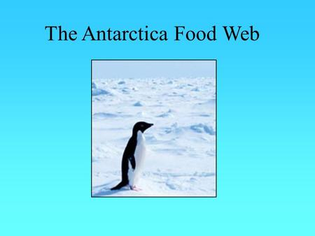 The Antarctica Food Web. What is a Food Web? It is different to a basic food chain. It is a more complex food chain which make cross over between species.