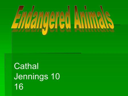 Endangered Animals Cathal Jennings 10 16.