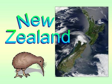 After laying it she leaves her husband to hatchth The kiwi bird was named so for the sound of its chirp. This flightless bird, about the size of a domestic.