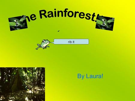 By Laura! rib it. The layers of the rainforest are the emergent layer at the top, the canopy layer, the understory and the forest floor. Layers like.