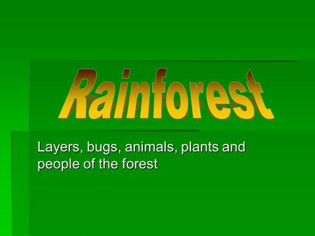 Layers, bugs, animals, plants and people of the forest.