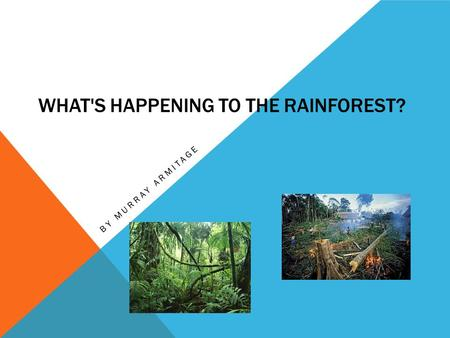 WHAT'S HAPPENING TO THE RAINFOREST? BY MURRAY ARMITAGE.