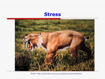 Stress Let's take the example of stress again. This time mom doesn't have to be stressed out during pregnancy, but rather it's the chronic stress and strain,