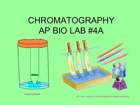 CHROMATOGRAPHY AP BIO LAB #4A Image by Riedell