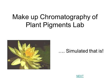 Chromatography of plant pigments