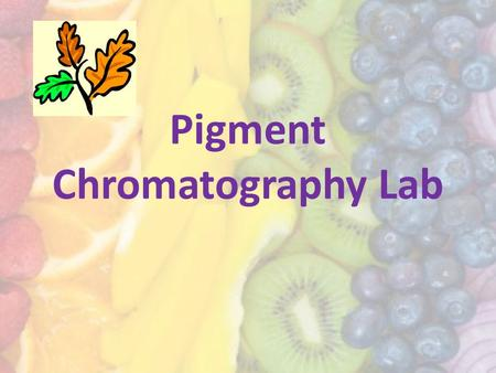 Pigment Chromatography Lab. Plant leaves contain different color pigments that give the leaf color. Plant pigments come in many different colors but we.