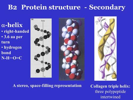  -helix right-handed 3.6 aa per turn hydrogen bond N-H···O=C Collagen triple helix: three polypeptide intertwined A stereo, space-filling representation.