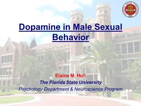 Dopamine in Male Sexual Behavior Elaine M. Hull The Florida State University Psychology Department & Neuroscience Program.