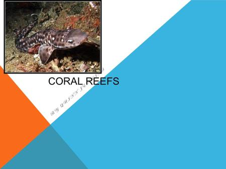 CORAL REEFS BY QUINN JENKINS. Salt water biome with many plants and animals Coral reef CORAL REEFS.