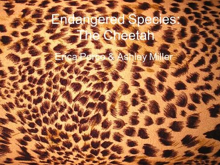 Endangered Species: The Cheetah