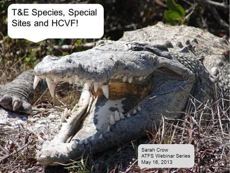 T&E Species, Special Sites and HCVF! Sarah Crow ATFS Webinar Series May 16, 2013.