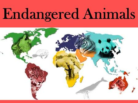 "Endangered Animals. What does ""endangered"" mean? According to the 1973 US Endangered Species Act, animals are defined as endangered if the species is."