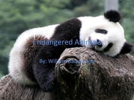 Endangered Animals By: William Baquerano. Basic Unit Questions What does endangered mean? What kind of animals are endangered? How do animals become endangered?