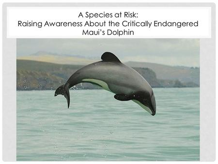 A Species at Risk: Raising Awareness About the Critically Endangered Maui's Dolphin.