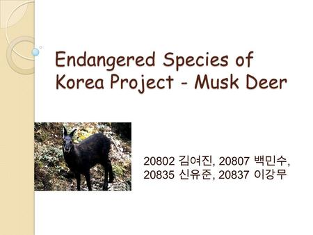 Endangered Species of Korea Project - Musk Deer 20802 김여진, 20807 백민수, 20835 신유준, 20837 이강무.