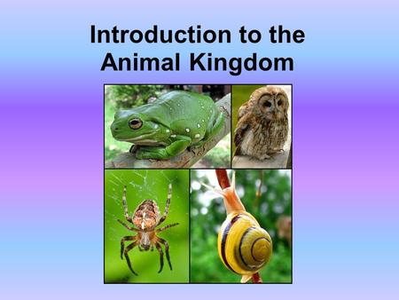 "Introduction to the Animal Kingdom. Which of these is an ""animal""?"