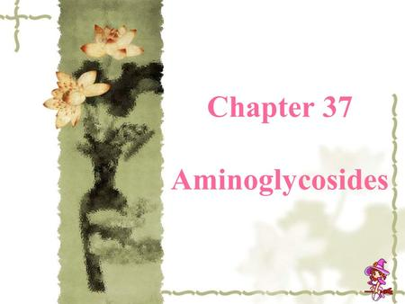 Chapter 37 Aminoglycosides. History  1944 StreptomycinStreptomycin  1957 kanamycin  1964 gentamicin  1967 tobramycin  Amikacin & netilmicin.