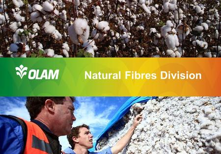 Natural Fibres Division. The Brand Behind The Brands 2 Olam History: Rapid Growth & Expansion Transitioned from a Trader to an Integrated Global Supply.