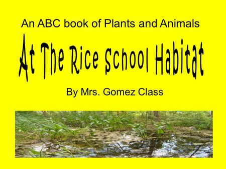 By Mrs. Gomez Class An ABC book of Plants and Animals.
