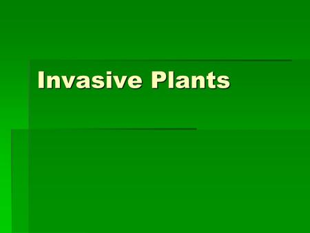 Invasive Plants. What are they?  Come into an area and out-compete native plants  Usually do not have native predators (i.e. insects, grazing animals)