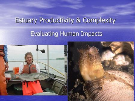 Estuary Productivity & Complexity Evaluating Human Impacts.