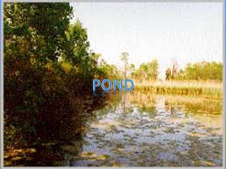 We are learning about the pond. Ponds usually have four seasons. Sometimes they are hot or cold. Ponds are small bodies of fresh water.