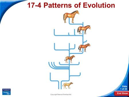 End Show Slide 1 of 25 Copyright Pearson Prentice Hall 17-4 Patterns of Evolution.