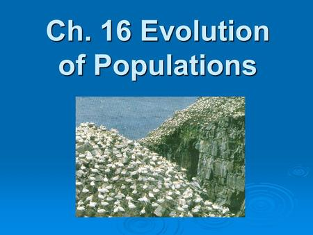 Ch. 16 Evolution of Populations