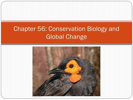 Chapter 56: Conservation Biology and Global Change
