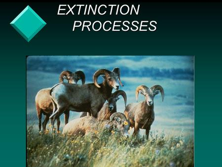 EXTINCTION PROCESSES EXTINCTION PROCESSES. v Rare species are at risk due to: – environmental stochasticity.