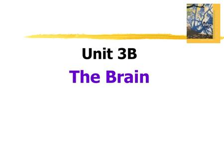 Unit 3B The Brain.  Lesion  tissue destruction  a brain lesion is a naturally or experimentally caused destruction of brain tissue.