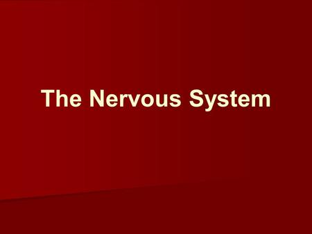 The Nervous System. Divisions of the Nervous System Central N.S. (brain and spinal cord ) Nervous system Autonomic N.S. (controls self-regulated action.