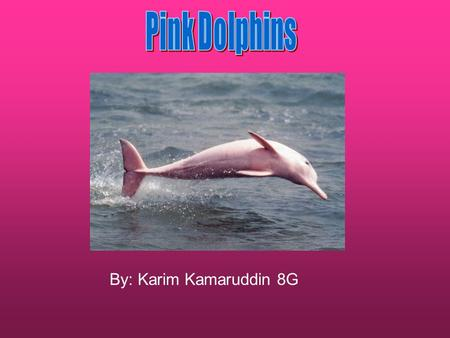 By: Karim Kamaruddin 8G. Pink Dolphins can also be called the Chinese white dolphin because at different stages of life these dolphins change colour.