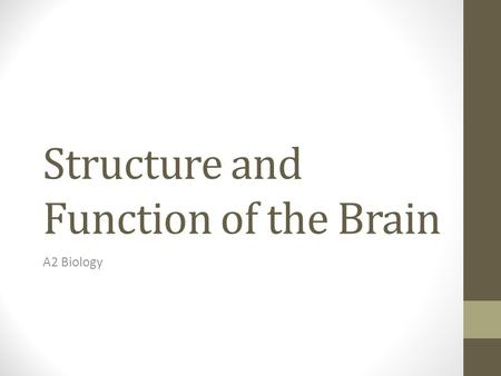 Structure and Function of the Brain A2 Biology. Learning Objectives Locate and state the functions of the regions of the human brain's- Cerebral hemispheres.